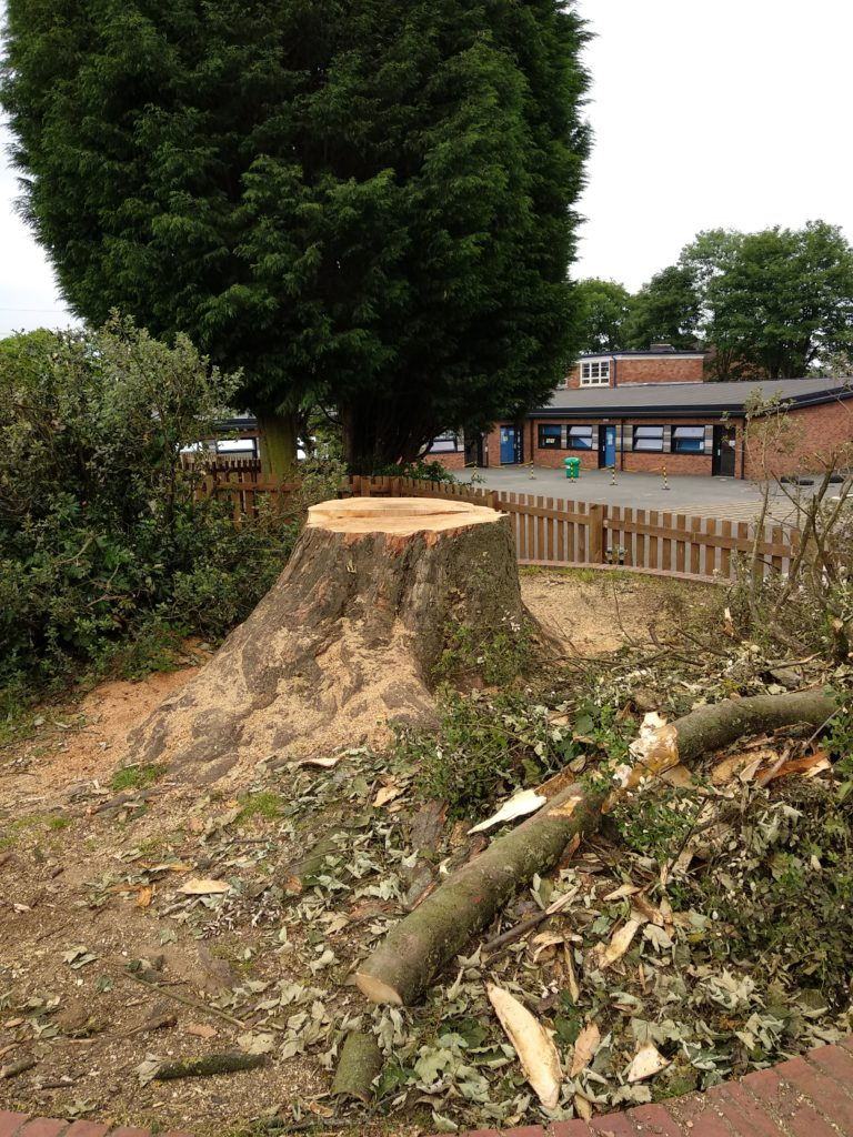 Tree felled at Paganel School